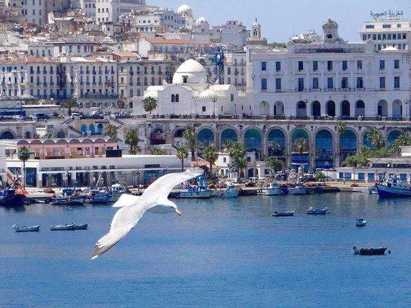 Read more about the article Histoire d'Alger par la photo